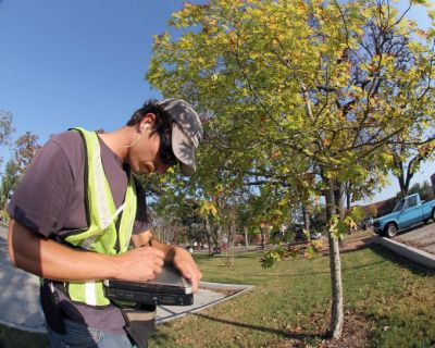 Tarleton Tree Survey